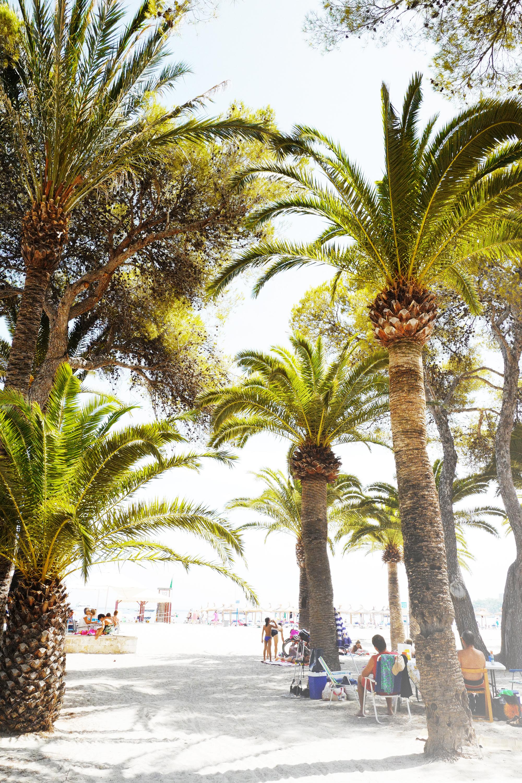 palmtrees palma bianca blogg